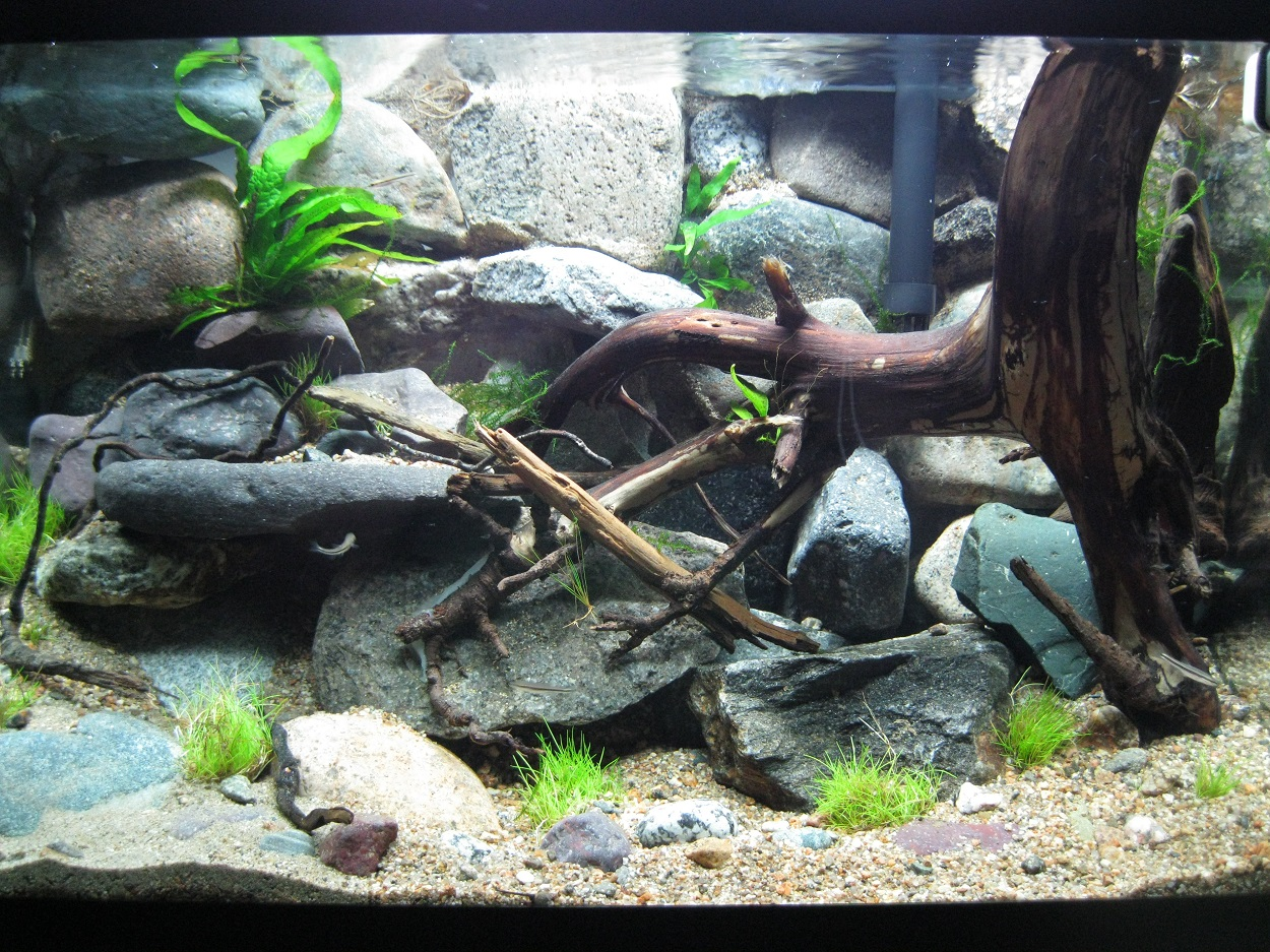 Rock Wall Fish Tank