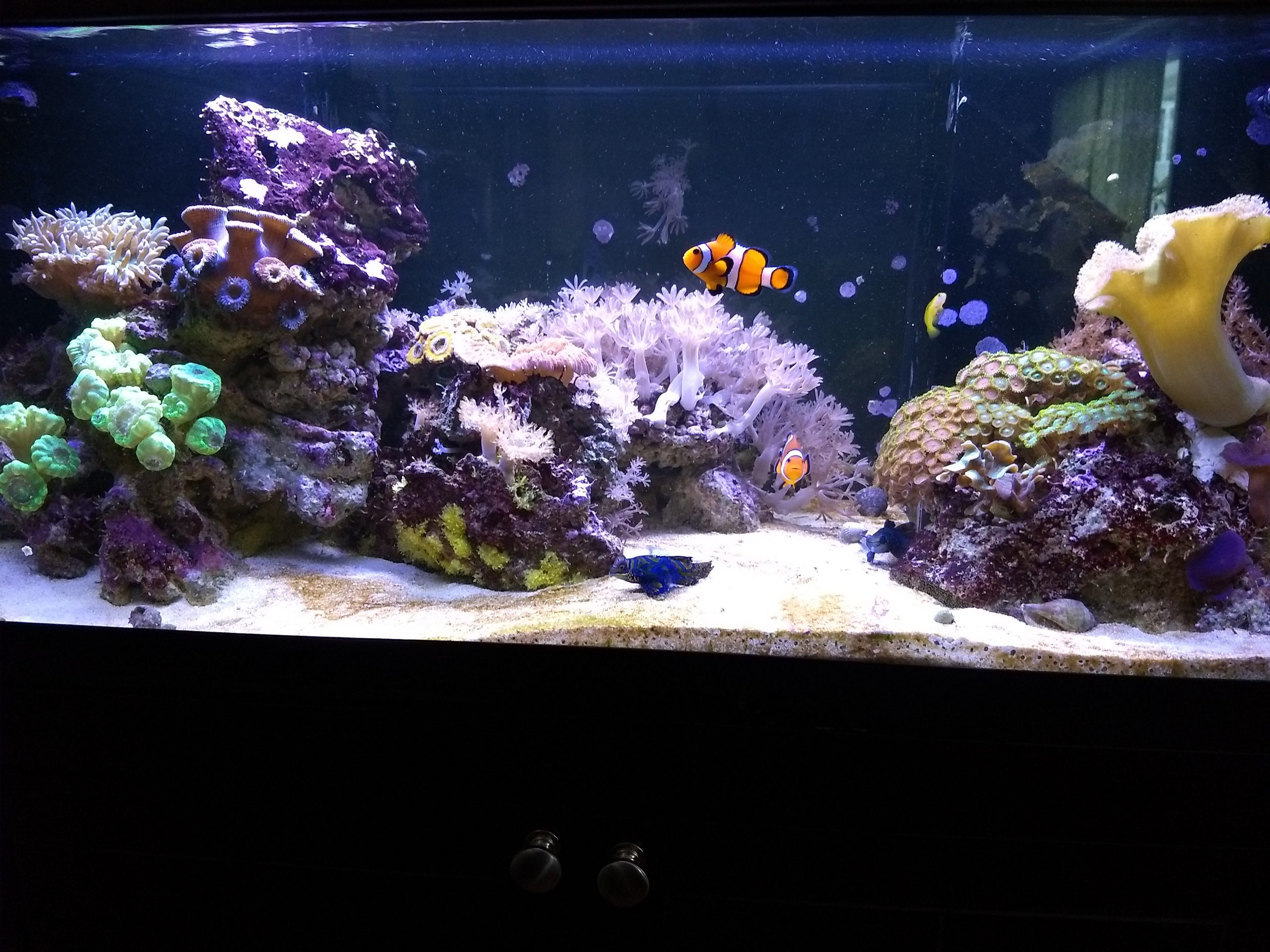 20 Gallon Reef Tank